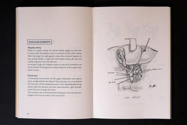 Anatomia do Figado miolo